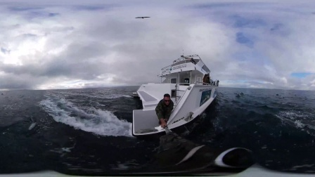 VR全景视频  - Auckland Whale & Dolphin Safaris