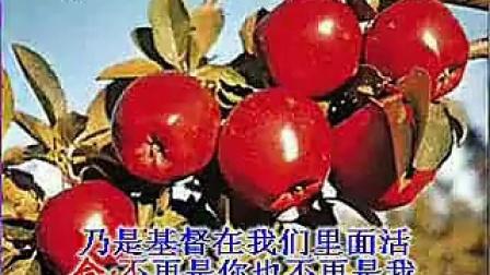 371共同兴旺福音(流畅)_标清
