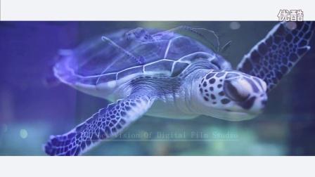 新视觉数字电影 大学生应聘短片 爱龟龟