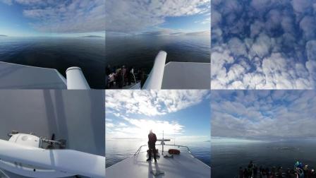 奥克兰观鲸VR全景视频