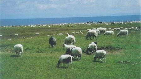 房哥口琴曲  美丽的草原我的家