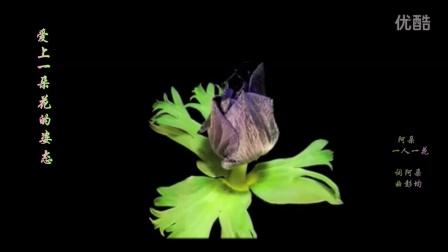 一人一花 flower blooming -- 阿朵 (同步歌词)