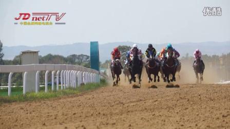 金盾马术视频新闻:2016中国速度赛马大奖赛(山西赛区)圆满落幕