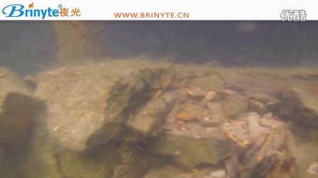 Brinyte磁控潜水手电筒DIV11,波兰潜水