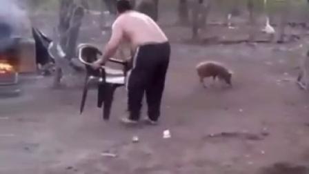 大猪的愤怒