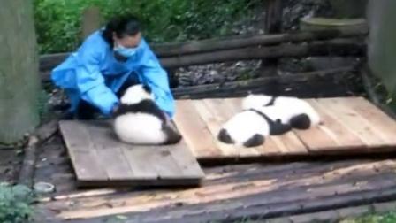 20161007成都大熊猫繁育研究基地2