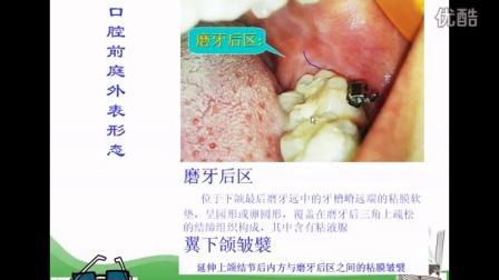 口腔颌面部解剖生理