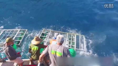 惊险,大白鲨撞破潜水员的笼子