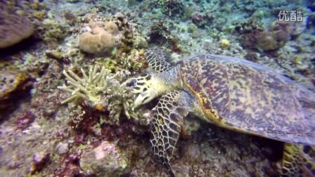 LEO & JACKY 的菲律宾科隆潜水记忆