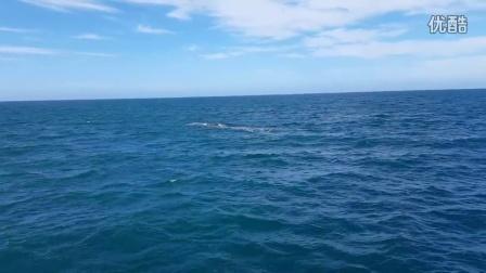 11月20日凯库拉地震后第一次出海发现五只抹香鲸!