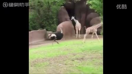 【潮流视频】 二逼动物欢乐多