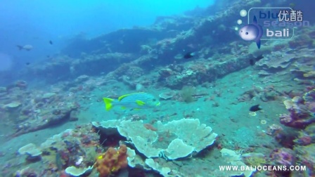 巴厘岛 图蓝本(Tulamben)潜水
