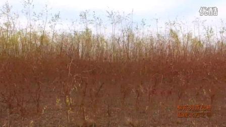 中喜生态苗木园区之秋