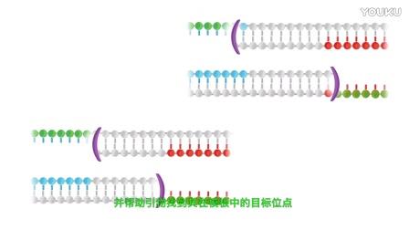 RPA核酸恒温扩增技术是什么?