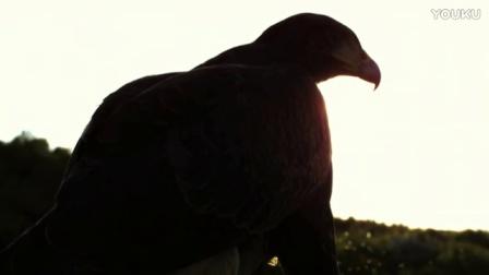 0572-雄鹰-特写1