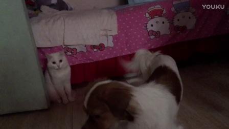 狗狗猫猫亲一个