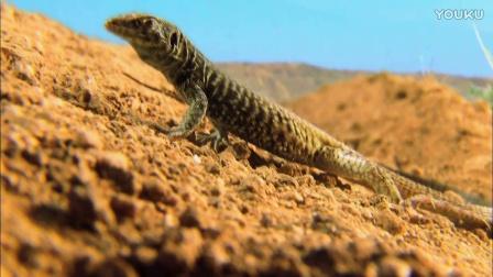 0562-沙漠中的蜥蚁
