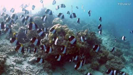 马尔代夫新岛米莱哚浮潜视频