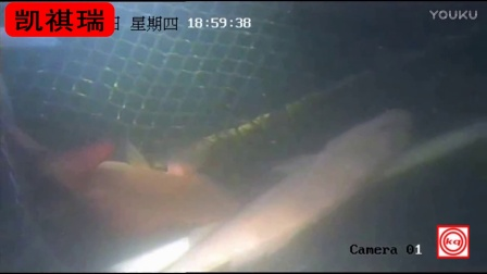 水下监控摄像头拍摄效果视频(www.kqafzn.com)