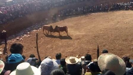 红石洞花山斗牛VID_20170206_155803