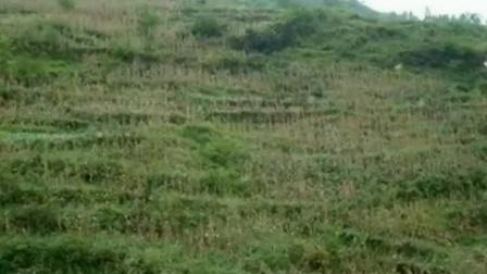 铁厂乡董渡村2004年图片制作视频