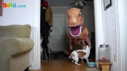 狗狗:鬼知道我今天经历了什么