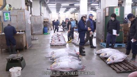 东京筑地市场的美食战斗!金枪鱼大拍卖