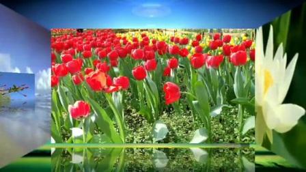 春天一百花争艳,鸟语花香