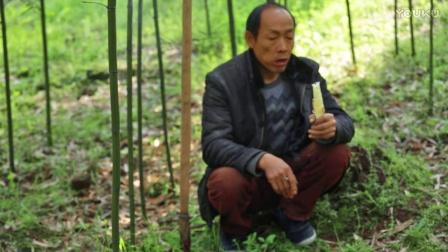 雅食记:来自春天的美食---雷竹笋
