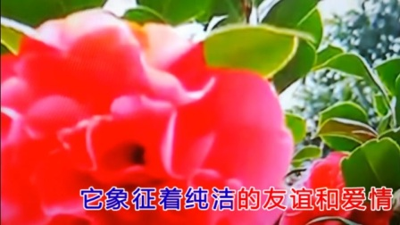 由一首古老的塔吉克族民间歌曲改编的情歌《花儿为什么这样红》