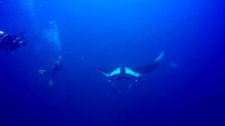 2017斯米兰 manta ray