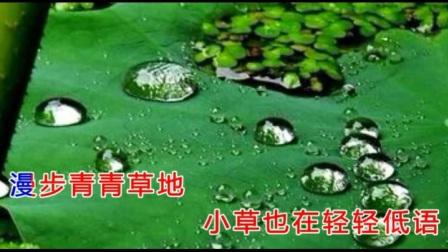 电影《小城故事》主题曲《微风细雨》一首非常好听的歌曲