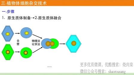 2.1植物细胞工程(下):植物体细胞杂交技术-于迪