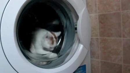 哎呀,淘气猫咪跑进洗衣机里拉