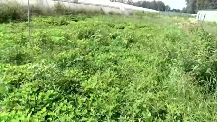 室内外养殖蝎子养殖最新蝎子养殖技术视频教程播放