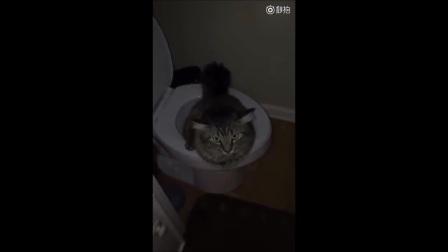 一网友半夜起来上厕所, 发现自己家喵星人正坐在马桶上撒尿!