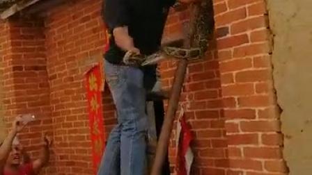 猛男抓大蟒蛇好厉害