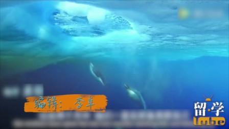 日本母企鹅爱上饲养员 只因他的声音和公企鹅很像