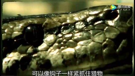 豹子捕杀4米巨蟒, 一去就是一口咬住蛇头, 没想意外发生了