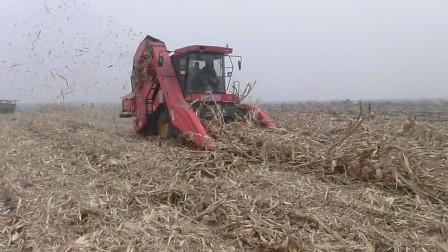 天人大四行玉米收割机收倒伏
