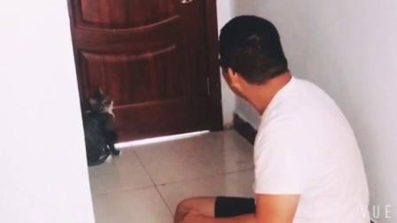 猫从来不怕狗