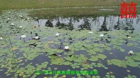 在湿地公园【一首醉人的歌】