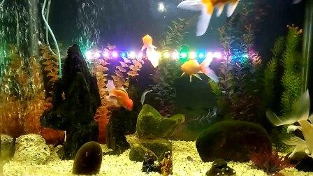 鱼儿鱼儿水中游