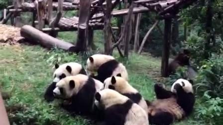 大熊猫基地