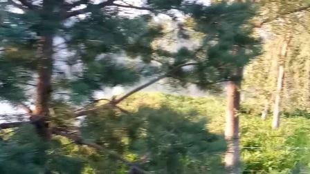盛夏,清晨四点多的文化公园,我手机拍摄