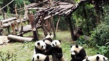 熊猫基地成都