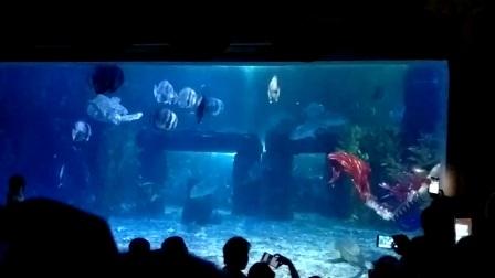 台州海洋公园美人鱼的故事