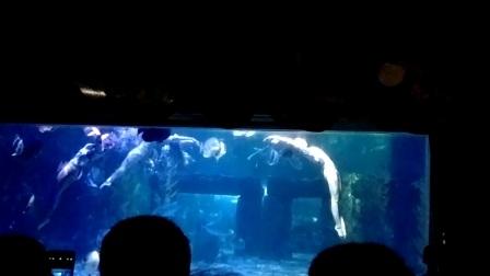 台州海洋公园.水上芭蕾2