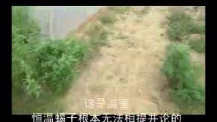 临沂蒙阴山东塑料大棚蝎子养殖技术基地合作社视频大棚生态养蝎视频