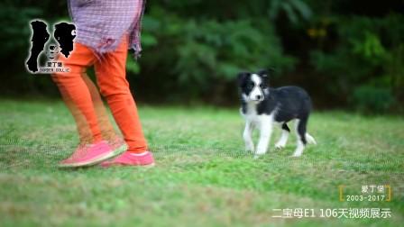 二宝母E1-106天 爱丁堡边境牧羊犬-黑白色边牧幼犬